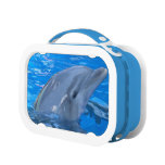 Adorable Dolphin Lunch Box