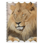 Adorable Lion Notebook