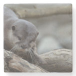 Adorable Otter Stone Coaster