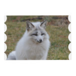 Adorable White Fox Placemat