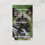 African Wild Dog Photo Business Cards