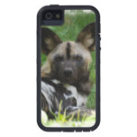 African Wild Dogs iPhone SE/5/5s Case