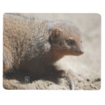 Amazing Dwarf Mongoose Journal