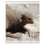 Amazing Dwarf Mongoose Plaque