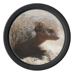 Amazing Dwarf Mongoose Set Of Poker Chips