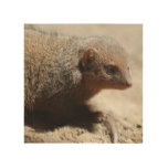 Amazing Dwarf Mongoose Wood Wall Decor