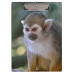 Amazing Squirrel Monkey Clipboard