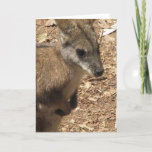 Baby Kangaroo Greeting Card
