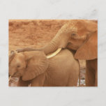 Bathing Baby Elephant Postcard