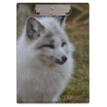 Beautiful White Swift Fox Clipboard