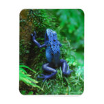 Blue Poison Arrow Frog Magnet