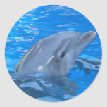 Bottlenose Dolphin Sticker