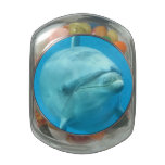 Bottlenose Dolphin Underwater Glass Jar