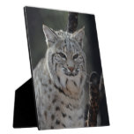Creeping Bobcat Plaque