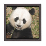 Cute Giant Panda Bear Keepsake Box