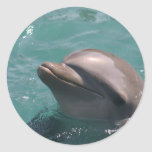 Dolphin Grinning  Stickers