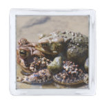 Frogs Silver Finish Lapel Pin