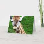 Giraffe Photo Greeting Card