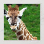 Giraffe Photo Invitation