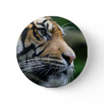 Gorgeous Bengal Tiger Face Pinback Button