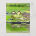 Green Frog Invitation