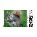 Grey Squirrel Postage Stamp