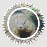 Groundhog Stickers