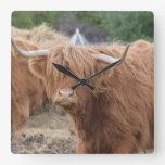 Highland Cow Square Wall Clock
