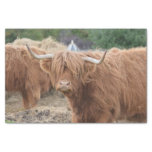 Highland Cow Tissue Paper