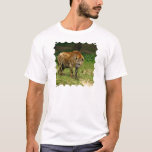 Hyena Prowl Men's T-Shirt