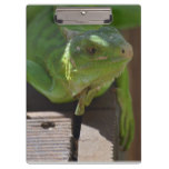 Iguana in the Tropics Clipboard