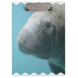 Large Manatee Underwater Clipboard