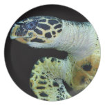 Leatherback Sea Turtle Plate
