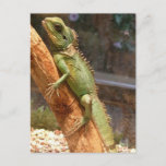 Lizard Climbing a Tree Postcard