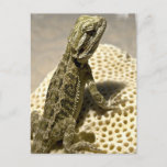 Lizard Species Postcard