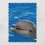 Lovable Dolphin Invitation