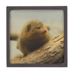 Mongoose a Tree Branch Jewelry Box