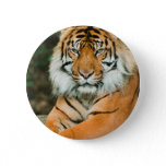 Orange Tiger Button