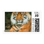 Orange Tiger Postage Stamp
