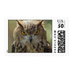 Owl Photo Postage Stamp