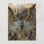 Owl Photo Postcard