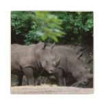 Pair of Rhinos Wooden Coaster