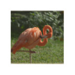 Perfect Pink Flamingo Wood Print