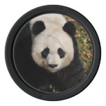 Petulant Panda Bear Set Of Poker Chips