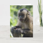 Playful Monkey  Greeting Card
