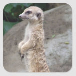 Poised Meerkat Stickers