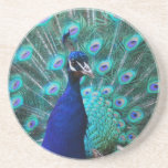Pretty Peacock Coaster