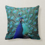 Pretty Peacock Pillow
