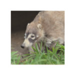 Prowling Coati Wood Wall Decor