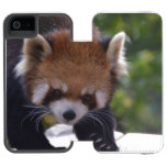Prowling Red Panda Wallet Case For iPhone SE/5/5s